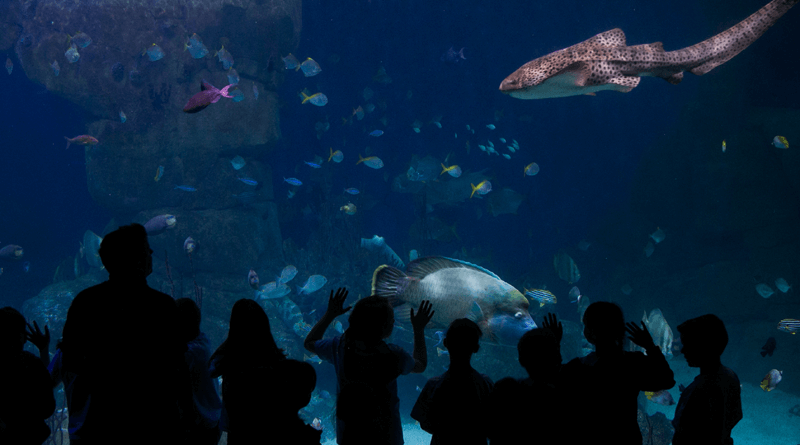 National Maritime Aquarium